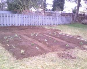 nursery-planting