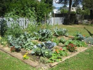 Garden Jul19